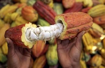 """La OMPI otorga el certificado de registro de la Denominación de Origen """"Cacao Grijalva""""."""