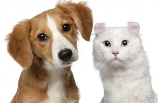 SCJN declara constitucional la reforma del 2014, a la Ley del Impuesto al Valor Agregado, con la cual se elimino la tasa 0% en el alimento procesado para animales y mascotas.