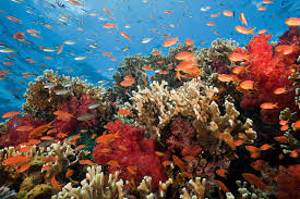 """Tratado para la protección de la Biodiversidad en """"Alta Mar"""""""