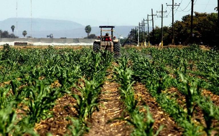 El desabasto de combustible se ha visto reflejado en pérdidas por $5,500 millones de pesos en el campo mexicano.