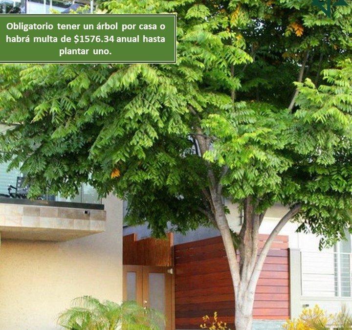 Obligatorio tener un árbol por casa o habrá multa de $1576.34 anual hasta plantar uno.